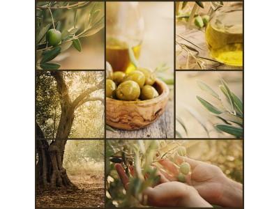Olive Oil tasting: visual and olfactory analysis