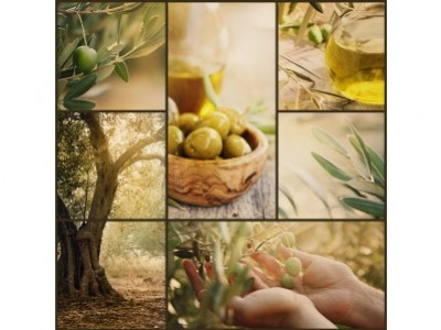 Olive Oil tasting: visual and olfactory analysis and which glasses to use